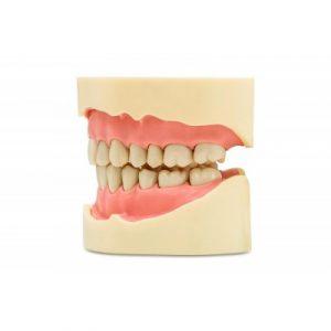 Фотография JG-J3 - фантомная челюсть | Foshan Jingle Medical Equipment (Китай)