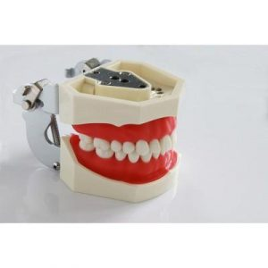 Фотография Фантомная челюсть 01 | Foshan Jingle Medical Equipment (Китай)