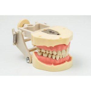 Фотография JG-J1 - фантомная челюсть | Foshan Jingle Medical Equipment (Китай)