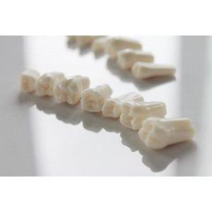 Product photo: Запасные зубы к фантомной челюсти